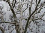 tree-against-sky