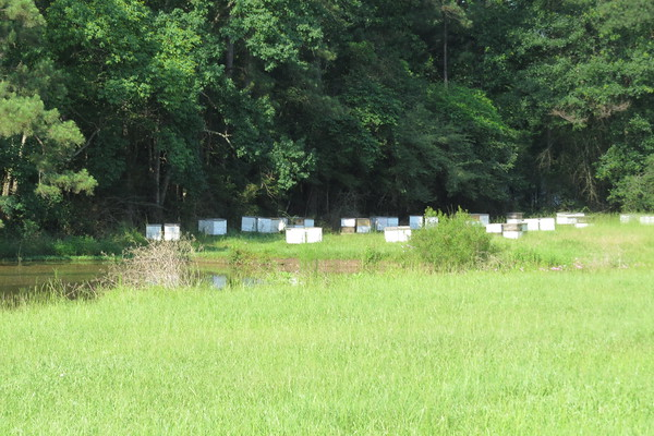 bee20hives20soon20to20leave20for20north20dakota-m