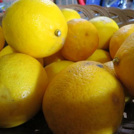 lemons20awaiting20pickling-m