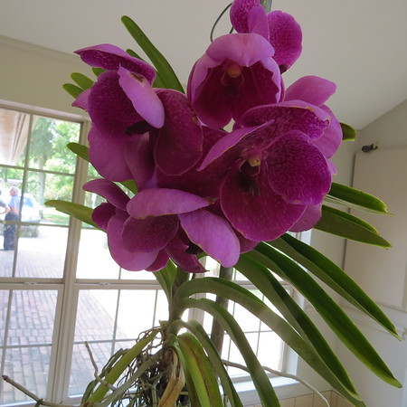 orchid-m