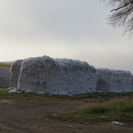 cotton20bales-m