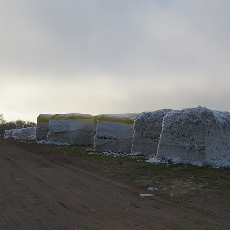 more20of20the20cotton20bales-m