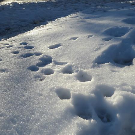 footprints-m