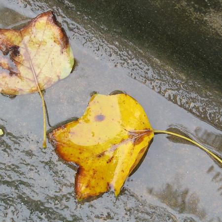 leaves-m