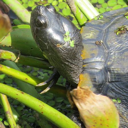 turtle204-m