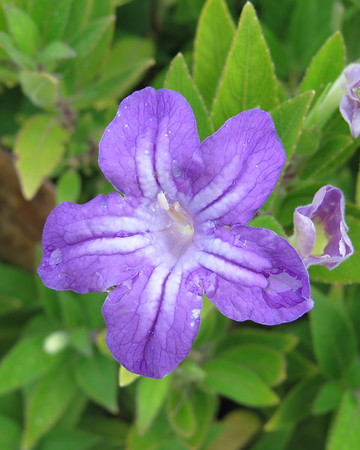 purple20flower-m
